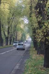 Droga wśród drzew