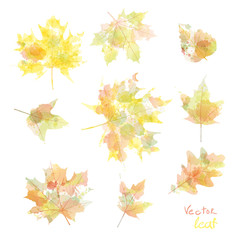 set of silhouettes of maple leaves in watercolor, vector