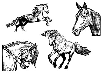 horse vector illustrations