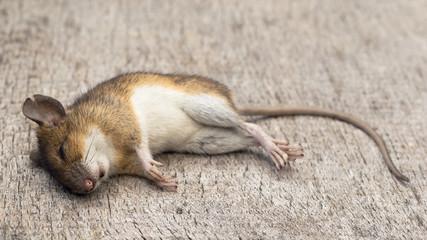 Bilder Und Videos Suchen Mäusearten