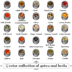 Vector collection of spices and herbs