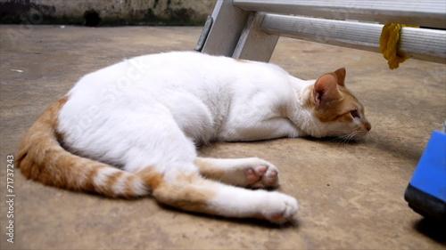 purina sensitive cat