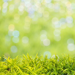 Green Grass With Summer Scene Background