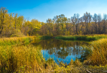 Lake in an autumn forest.