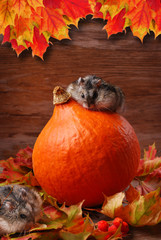 two hamsters in autumn scenery
