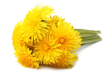 Bright beautiful yellow dandelions