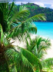 Summertime Landscape Palms