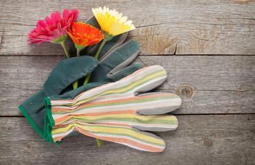 Gardening gloves and gerbera flowers