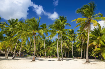 Exotic coast of the Dominican Republic with exotic palm trees