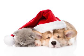 sleeping Pembroke Welsh Corgi puppy and kitten with santa hat. i