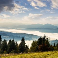 forest over foggy valley in autumn mountains