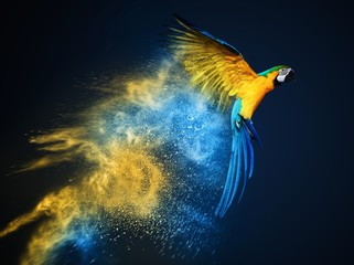 Wall Mural - Flying Ara parrot over colourful powder explosion