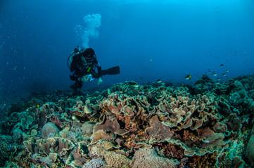 Diver swimming in Gili, Lombok, Nusa Tenggara Barat underwater