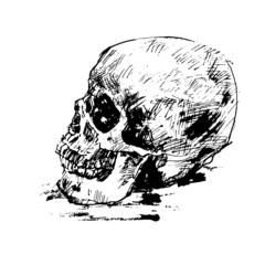 Drawing human skull on white