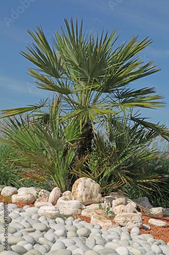 Massif avec d co de galets et palmier photo libre de droits sur la banque d 39 images - Massif avec palmier ...