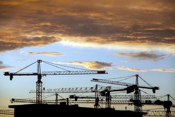 Cranes at dusk