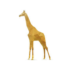 Abstract giraffe isolated on a white backgrounds