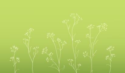 herbal floral hand drawn illustration