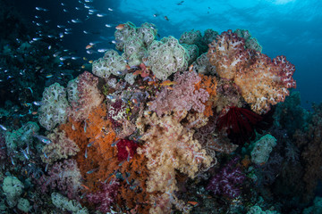 Colorful Soft Corals and Fish