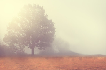 lonely single tree in a beautiful misty landscape