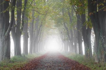 Kastanienallee im Nebel