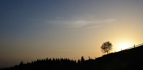 Scenic landscape with silhouette derevamydereva at sunrise