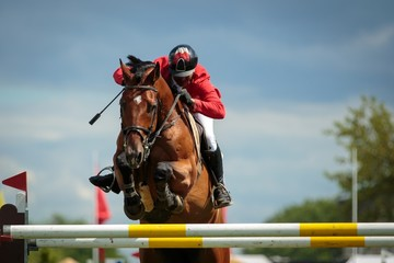 Foto op Aluminium Paardrijden Equestrian