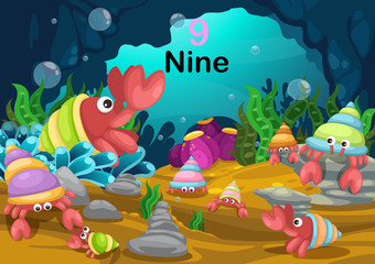 number nine hermit crab under the sea vector