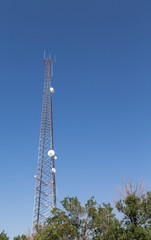 Microwave Tower Rising from Trees