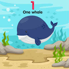 Illustrator of number one whale underwater