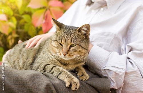 cat medical questions