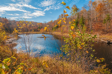 Northern Fall
