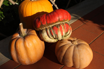 Red and orange pumpkins, autumnal harvest (outodoor)