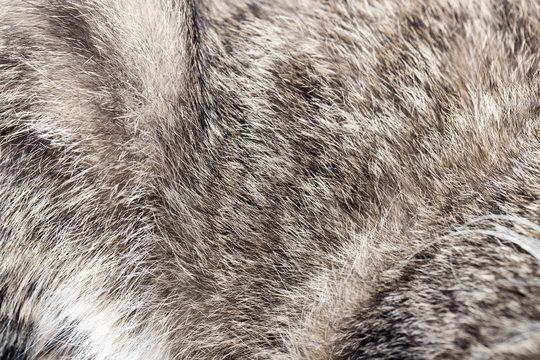 animal fur as background