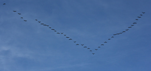 Silhouettes of flying geese in V formation