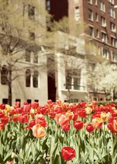 Red Tulips in a Sidewalk in Manhattan