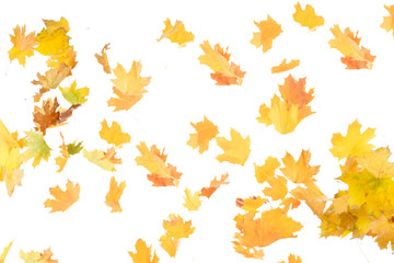 background of autumn leaves isolated