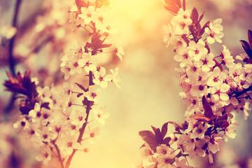 Tree flower blossom