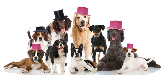 Hundeparty