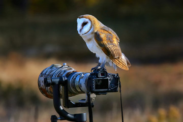 Barn owl sitting on a camera