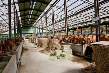 한우 농장