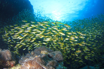 Coral reef underwater with school of fish