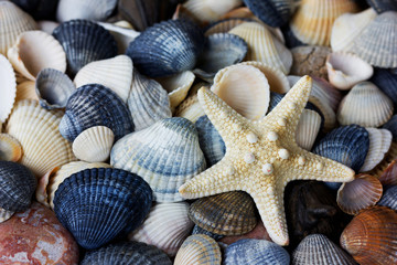 Starfish and seashells collection