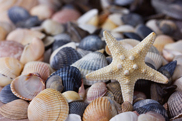 Starfish and seashells collection, can be used as a background
