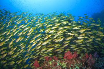 Fish school on coral reef in ocean