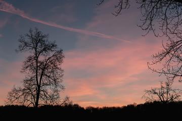 Morning rose of the december sky