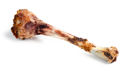 Isolated macro of eaten chicken drumstick bone