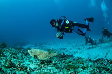 Divers & pufferfish, Gili Lombok Nusa Tenggara Barat underwater