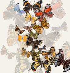 Russian butterflies.
