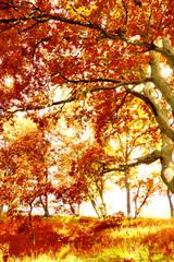 Fall Wallpaper Forest Landscape